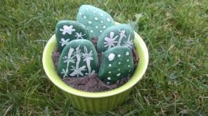 kaktusy z kamieni 7