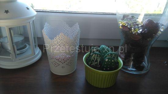 kaktusy z kamieni 8