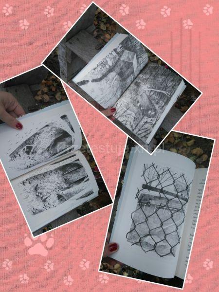 Kolaż rysunki Paxa