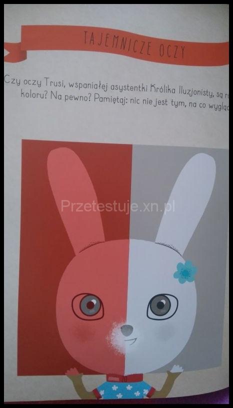 kolorowy królik