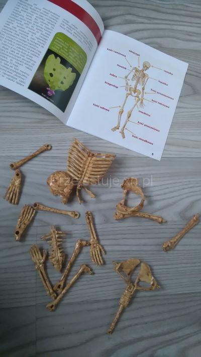 jak złożyć szkielet