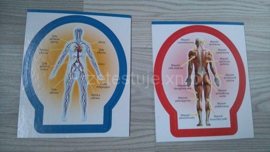 karty anatomiczne Poznaj ciało człowieka Lisciani