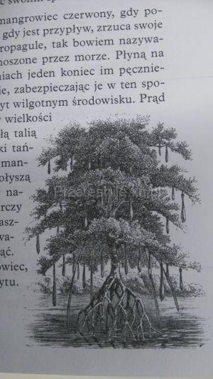 sprytne drzewo