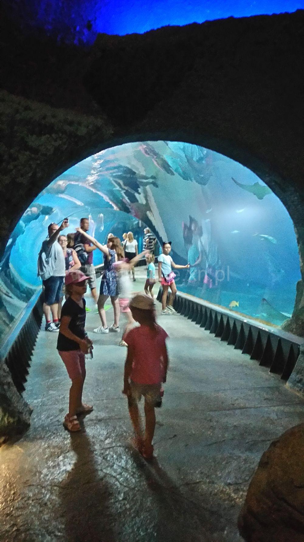 Wrocław Oceanarium