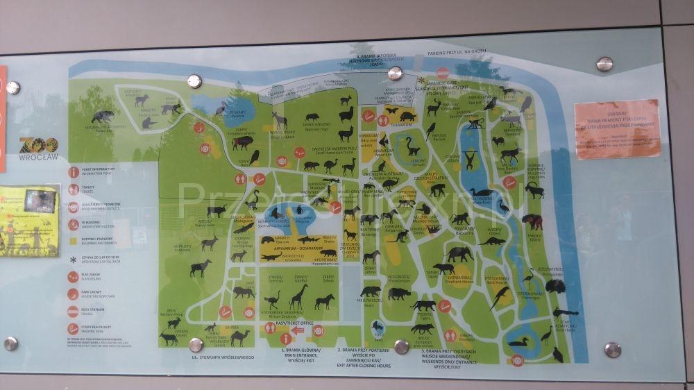 atrakcje wrocławskiego zoo