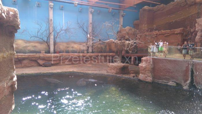 legowisko hipopotamów