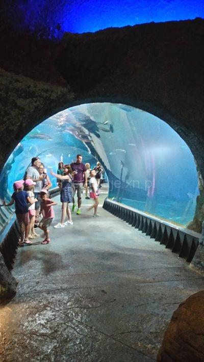 tunel w Afrykarium