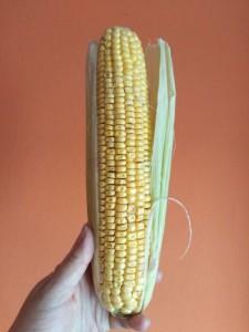 jak wygląda kukurydza